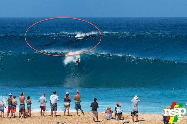 Humpback Whales Go For A Surf At Pipeline Adventure Sports