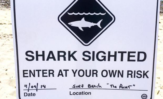 Sharks Hinder TV Show Set 'Animal Kingdom' While Filming at San Onofre State Beach